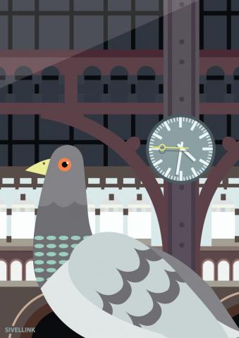 A3-Pigeon-Print